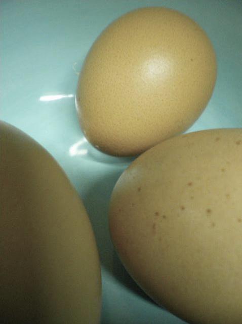 Eggs 4 Photograph by Julia  Chamberlain