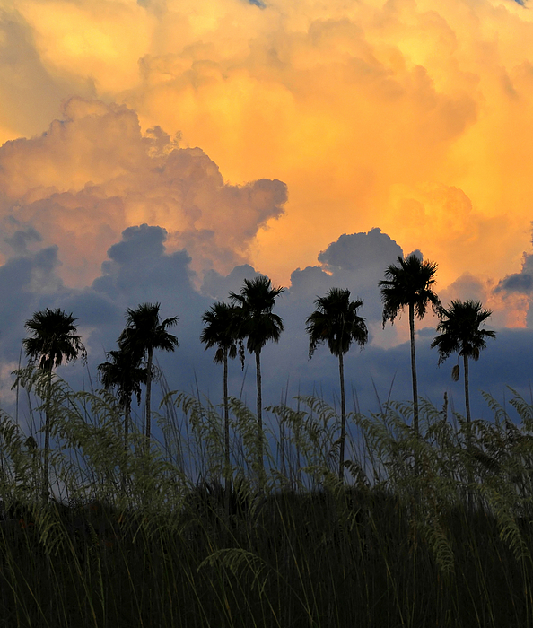 Fine Art Photography Photograph - Eight Palms by David Lee Thompson