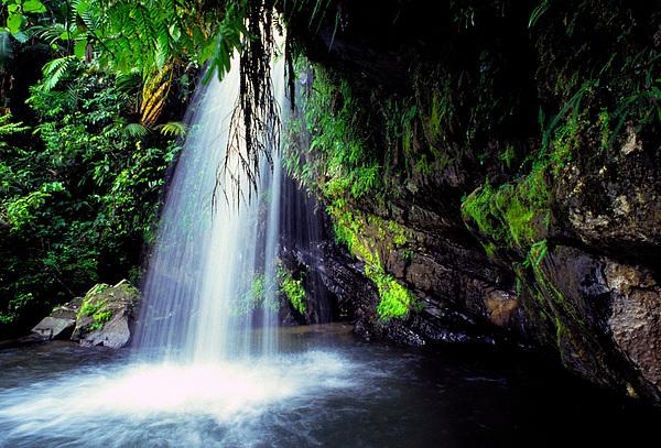 Puerto Rico Photograph - El Yunque Waterfall by Thomas R Fletcher