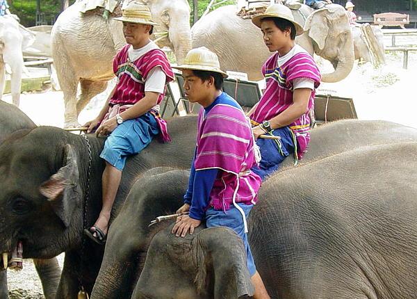 Elephants Photograph - Elephant Riders by Sue Ann Rybarczyk