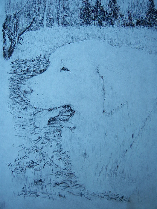 Dog Drawing - Ellie by Ken Day