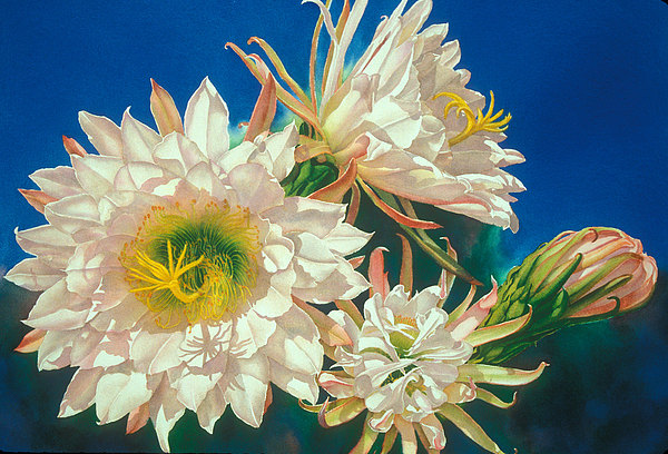 Floral Print - Encore by Mary Backer