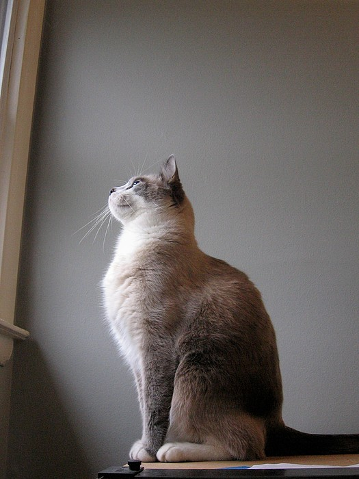 Cat Photograph - Enjoying The View by Brad Scoggins