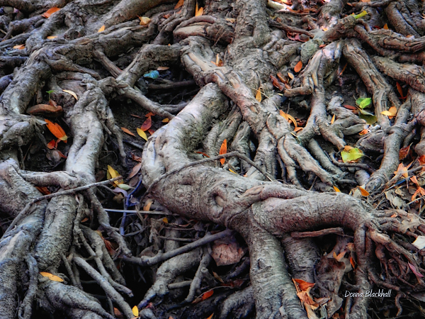 Roots Photograph - Entanglement by Donna Blackhall
