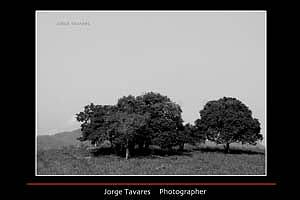 Landscape Photograph - Estoy Con Mis Amigos.  Im With My Firneds. by Jorge Tavares