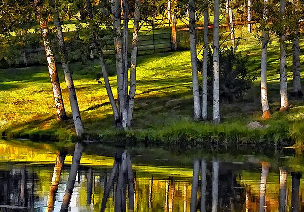 Evening Photograph - Evening Birches by Steve Harrington