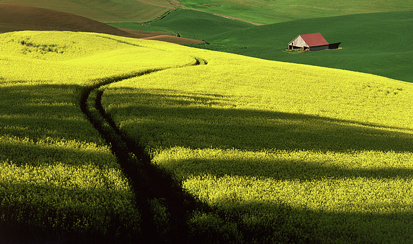 Palouse Photograph - Evening Shadows On The Palouse by Jerry McCollum