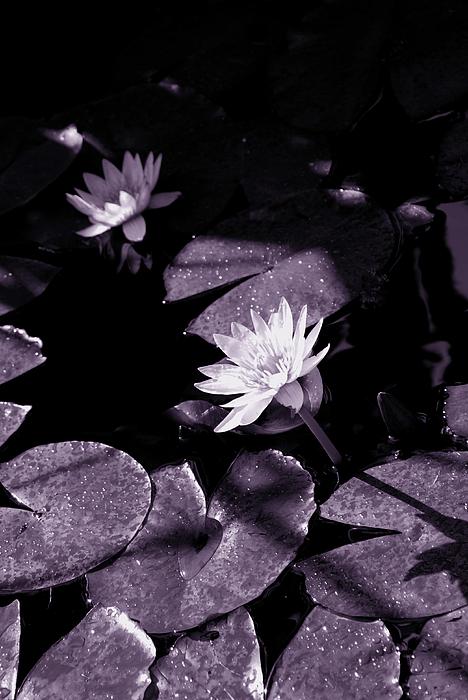 Flower Photograph - Evening Sun Light by Susanne Van Hulst