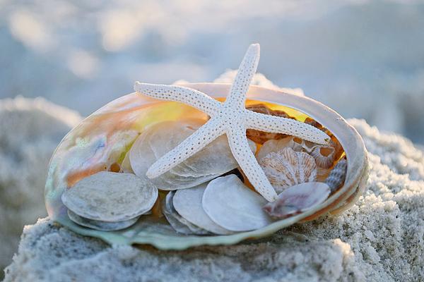 Seashells Photograph - Every Grain Of Sand by Melanie Moraga