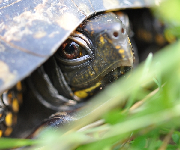 Turtle Photograph - Eye Of The Beholder by Joan Kerns