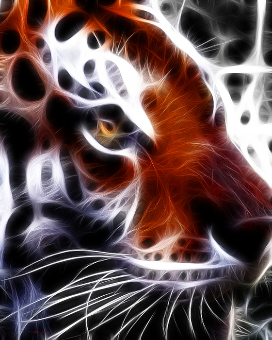 Animal Photograph - Eye Of The Tiger 2 by Wingsdomain Art and Photography