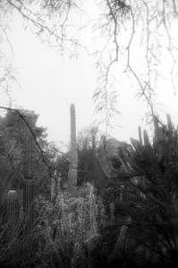 Cactus Photograph - Fairytale Saguaro by Kevin Igo