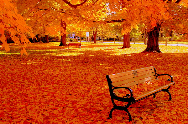 Fall Photograph - Fall Bench  Newburyport Ma by Suzanne DeGeorge