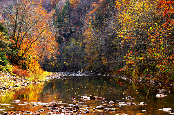 Autumn Photograph - Fall Color Elk River by Thomas R Fletcher