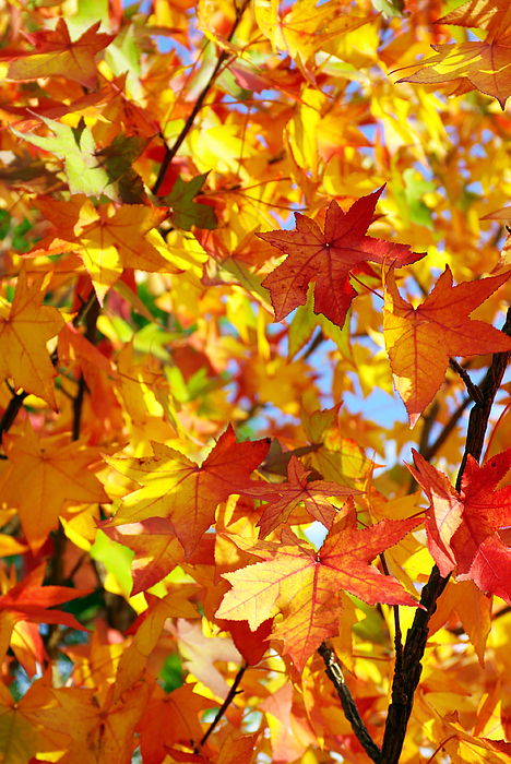 Autumn Photograph - Fall Leaves Background by Carlos Caetano