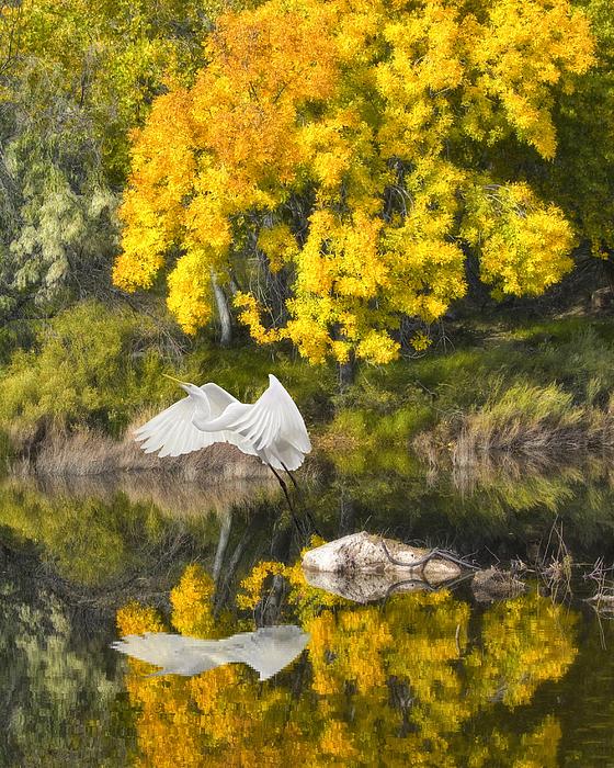 Bird Photograph - Fall Reflections by Chuck Brittenham