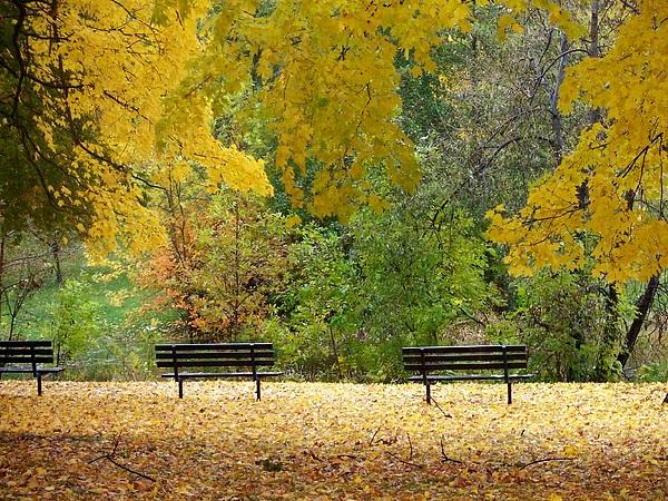 Fall Photograph - Fall Series 12 by Anita Burgermeister