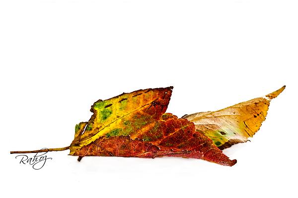 Autumn Photograph - Fallen In Fall  by Rahat Iram