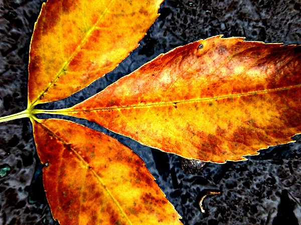 Orange Photograph - Fallen Leaves by Beth Akerman