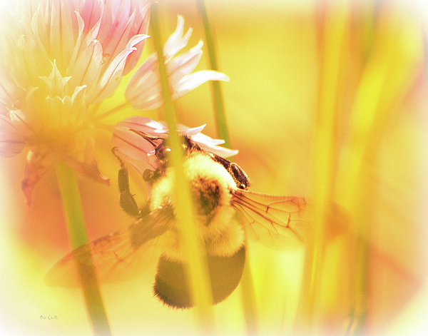 Bees Photograph - Fame Is A Bee by Bob Orsillo