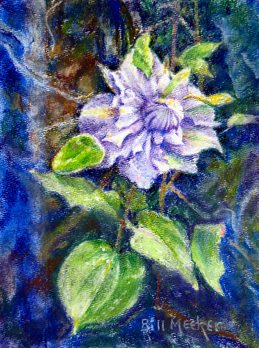 Floral Painting - Fancy Clematis by Bill Meeker