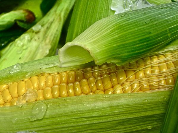 Corn Photograph - Farm Fresh by Gwyn Newcombe