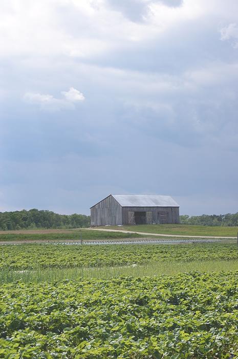 Farm House Photograph - Farm House by Tina McKay-Brown