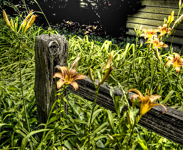 Fence Photograph - Fence And Flowers by Chris Fleming