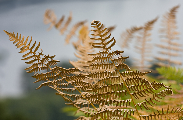 Fern Photograph - Ferns Growing By The River by Barbara  White