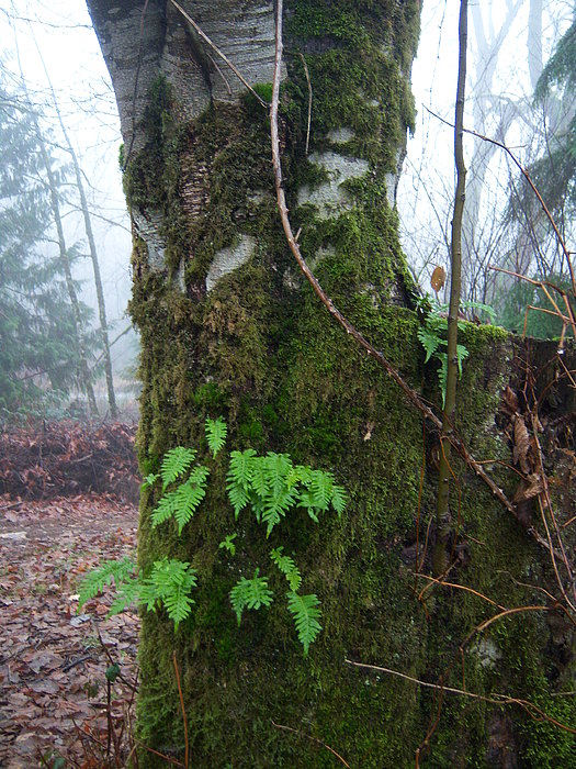 Fern Photograph - Ferns On A Foggy Day by Ken Day