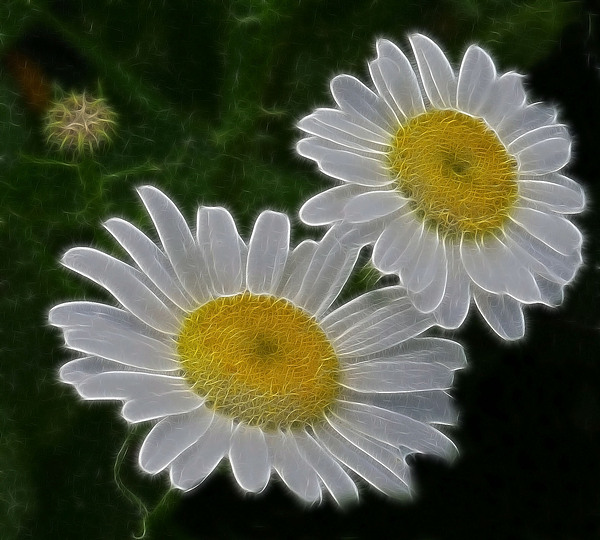 Field Photograph - Field Daisies by Julie Grace