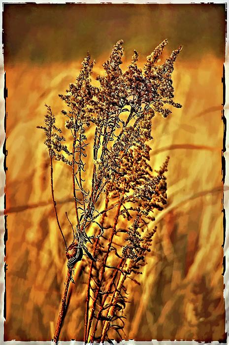 Weed Photograph - Field Frolic by Steve Harrington