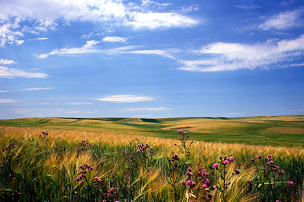 Landscapes Photograph - Field Of Dreams by Kathy Yates
