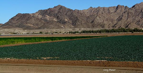 Patzer Photograph - Fields Of Yuma by Greg Patzer