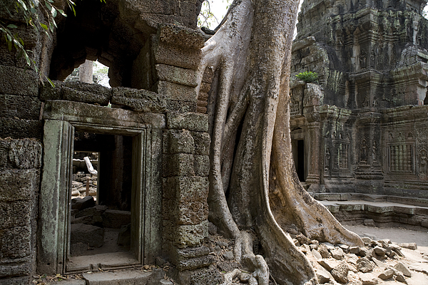 Day Photograph - Fig Tree Growing Over Crumbling Ruins by Rebecca Hale