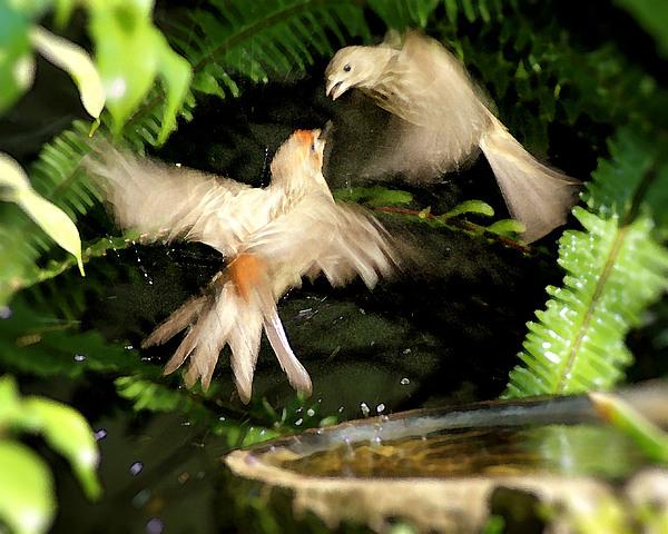 Bird Photograph - Finch Spat by Ellen Lerner ODonnell
