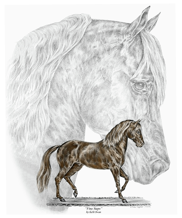 paso drawing fine steps paso fino horse print color tinted by kelli swan - Horse Pictures Print Color