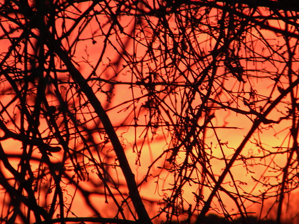 Sunrise Photograph - Fire by Cassandra Donnelly
