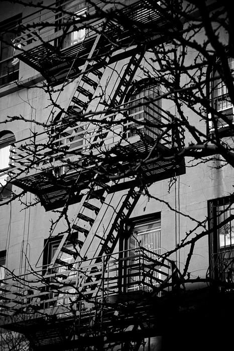 New York City Photograph - Fire Escape Tree by Darren Martin