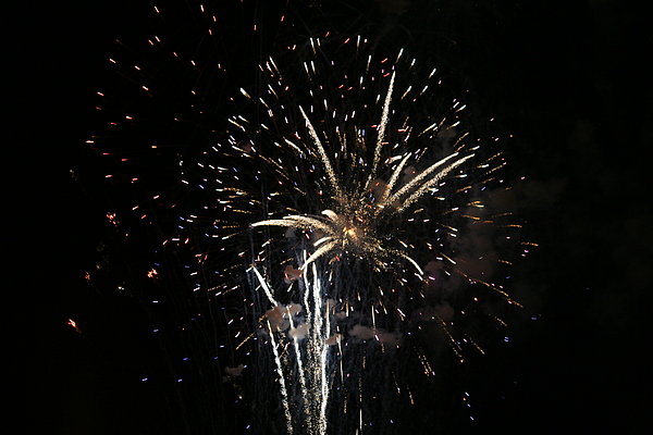 Firework Photograph - Firework In Action by Magda Levin-Gutierrez