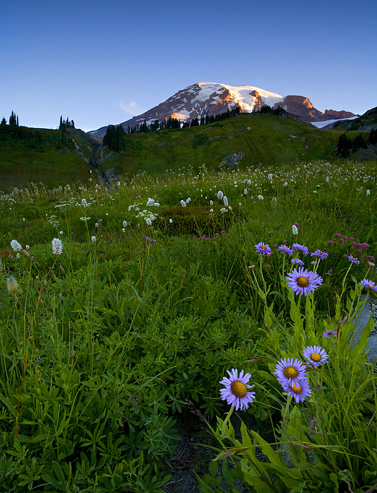 Rainier Photograph - First Light by Mike  Dawson