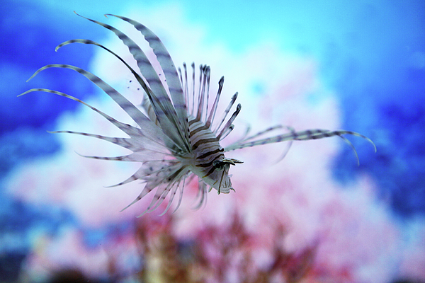 Horizontal Photograph - Fish In Aquarium by Love design, Love City, Love Life