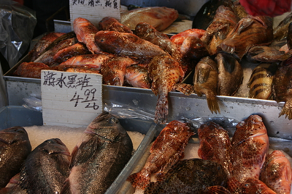 Fish market san francisco photograph by bill eggert for San francisco fish market