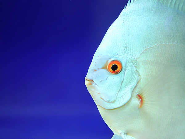 Horizontal Photograph - Fish by Photography T.N.T