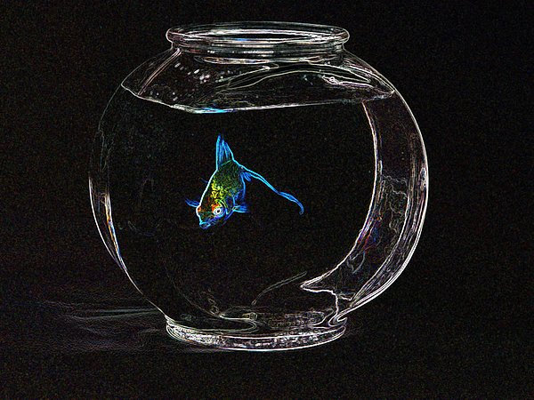 Fish Photograph - Fishbowl by Tim Allen