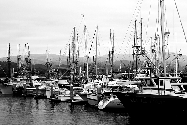 Black And White Photograph - Fishing Boats . 7d8208 by Wingsdomain Art and Photography