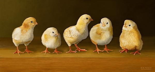 Chicks Digital Art - Five Chicks Named Moe by Bob Nolin