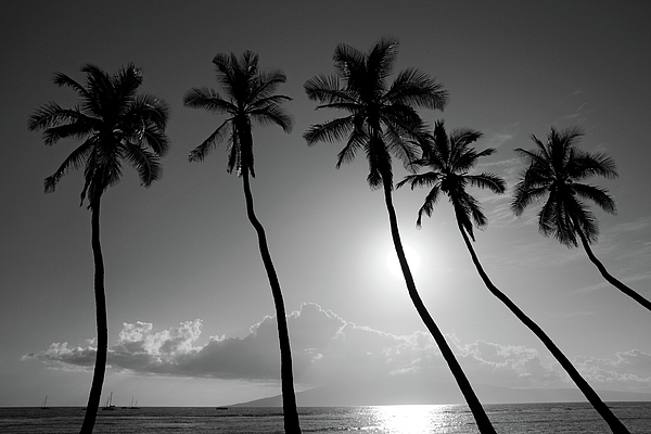Five Photograph - Five Coconut Palms by Pierre Leclerc Photography