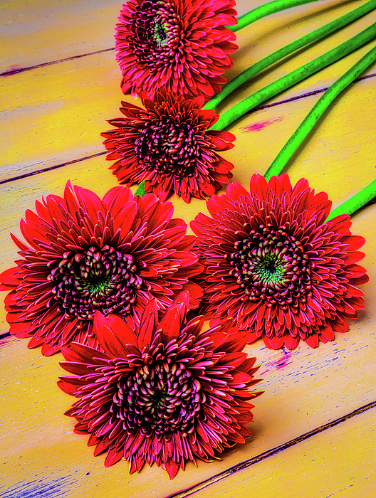 Mood Photograph - Five Red Dasies by Garry Gay