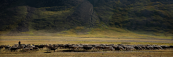 Animal Photograph - Flock Of Sheep by Konstantin Dikovsky